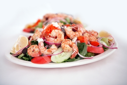 ShrimpSalad9994